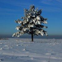 Мороз и солнце!!! :: Дмитрий Арсеньев