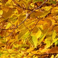 Золотой день октября :: Swetlana V