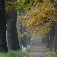 В ногу с туманом....... :: Юрий Цыплятников