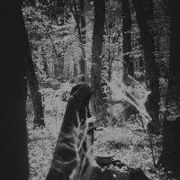 чёрный лес :: ufoto16©photography ufoto16©photography