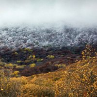 Осень и зима. Неожиданная встреча. :: Ольга