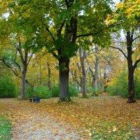 """""""Пряно пахнут опавшие листья, КружИт листопад...."""" :: Galina Dzubina"""