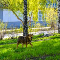 Собаки — хорошие люди :: Света Кондрашова