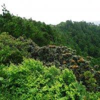 Джунгли в горах :: Ольга Васильева