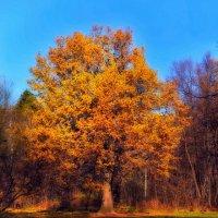 Золотая осень. :: Ксения Базарова