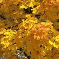 золото осени :: kuta75 оля оля