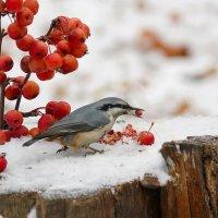 Яблоки на снегу... :: Ната Волга