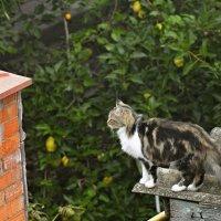 И только кошка гуляет сама по себе.... :: владимир