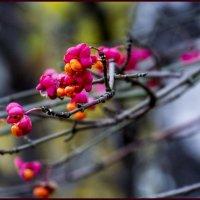 Осенний цвет. :: IRINA VERSHININA