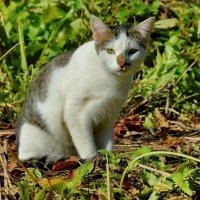 Тимка - грязный нос :: Olcen - Ольга Лён