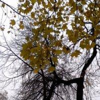 В ноябре :: Svetlana Lyaxovich