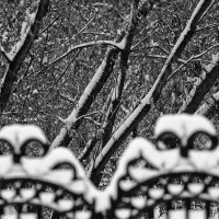 Графика зимы :: Сергей Елесин