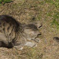 Поймала кошка мышку :: Владимир