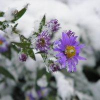 поспешила зима... :: Любовь Чумак