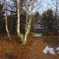Поздняя осень... В ожидании снега. :: Андрей Вычегодский