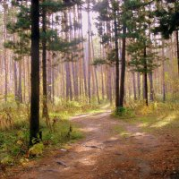 Солнечный день в лесу. :: Мила Бовкун