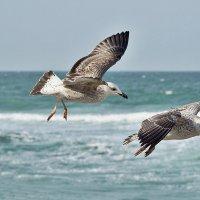 Над морем чайки кружатся :: Swetlana V