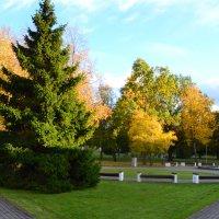 Солнечная осень. :: zoja
