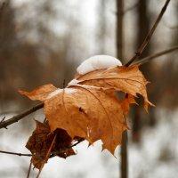 Скоро зима :: Сергей Козлов