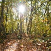 В осеннем лесу :: Лилия Левицкая