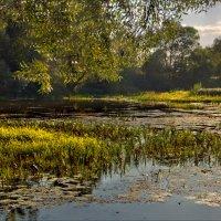 Озеро Хутор Бор :: Александр Березуцкий (nevant60)