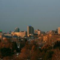 Город в лучах заката :: Ольга