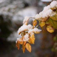 Осень vs зима :: Юрий Гайворонский