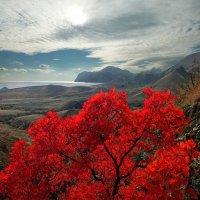 алеют скумпии листы в осеннем свете Киммерии :: viton