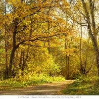 Балтийская осень :: vik zhavoronka