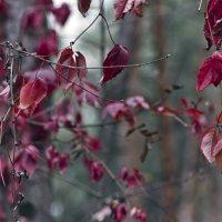 краски природы1 :: Геннадий Свистов