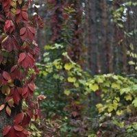 краски природы 5 :: Геннадий Свистов