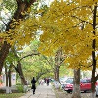 Осень в г. Саки :: Валерий Басыров
