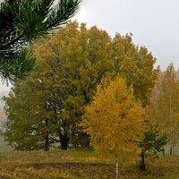 Туманная осень :: Александр Березуцкий (nevant60)