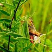сидел в траве :: Александр Прокудин