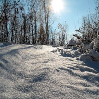 Ноябрь снегом засыпает.. :: Андрей Заломленков