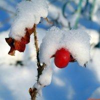 Зимнее витаминохранилище :: Андрей Заломленков
