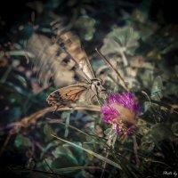Бабочка крылышками :: Ольга Мансурова
