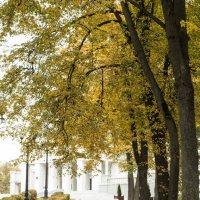 Осень в Минске :: Екатерина