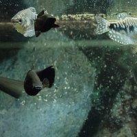 Рыбки. :: Клаус