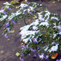 Поздней Осени творенье. Первый снег. :: Валентина ツ ღ✿ღ