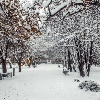 Зима в парке 3 :: Вячеслав Баширов