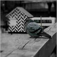 Умная птичка :: Galina Belugina