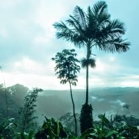 Пуэрто-Рико :: Arman S