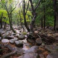 Rainy forest :: Илья Меркулов
