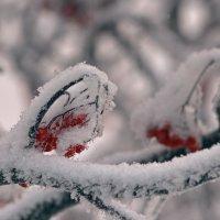 Причуды зимы :: Татьяна Соловьева