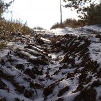 Первый снег :: Даниил Тур