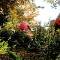 Осень и розы ( 2 ) :: Людмила