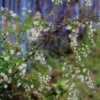 осенние цветы :: Viktor Eremenko