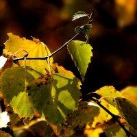 Осень, а листья  распускаются... :: Валерия  Полещикова