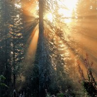 Восход солнца в лесу :: Сергей Чиняев